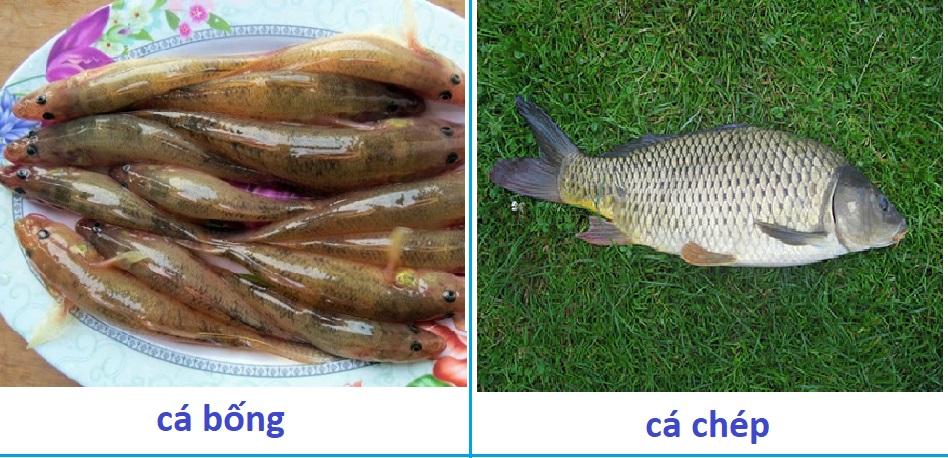 Máy lọc xương tốt từ loại cá bé đến loại cá lớn